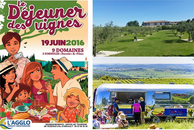 Le Déjeuner dans les vignes dimanche 19 Juin Pique nique sur l'herbe et balade dans les vignes